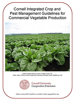 Vegetable Production Guide